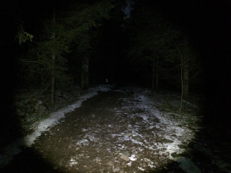 Glad jeg hadde med med meg hund i skogsmørket! Og hunder som holder seg i nærheten. Øynene lyste opp hver gang de snudde seg mot meg for å sjekke hvor jeg var.