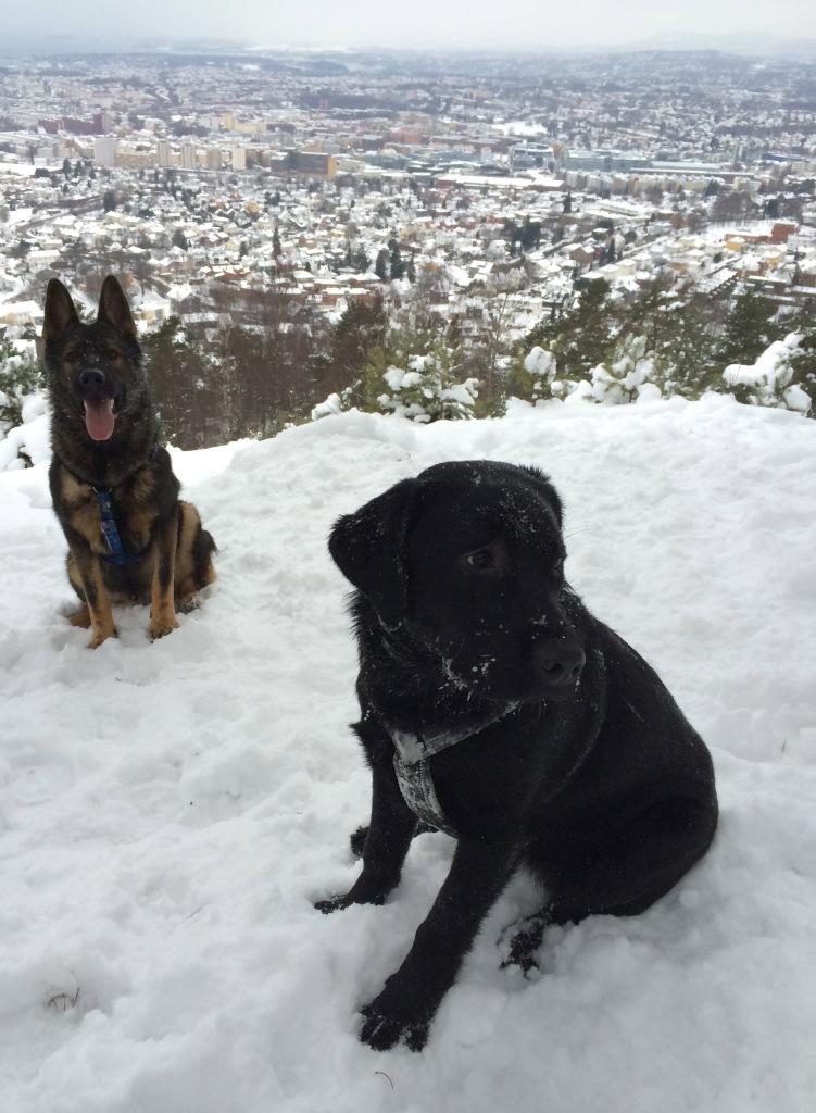 Quiero og Ziva i januar 2014.