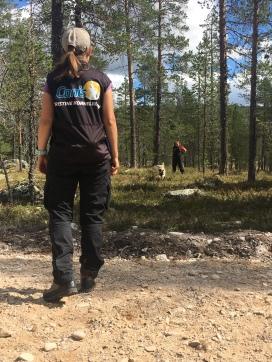 Meldingstrening i skogen med Kristine Korneliussen og Bajazz (Wheaten Terrier, 4 år gammel).